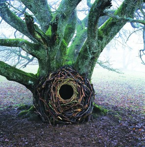 Andy Goldsworthy -Tree